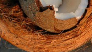 que es y usos de la fibra de coco