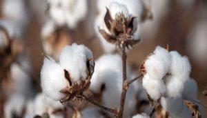 propiedades del algodón