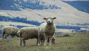 fibras textiles vegetales y animales