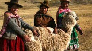 foto de alpaca en los Andes
