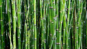características y usos de la fibra de bamboo