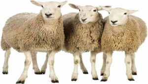 tipos de fibra de lana